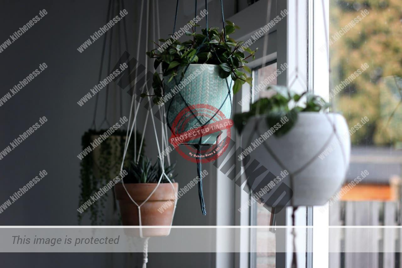 Hängepflanze für Esszimmer Gestaltung